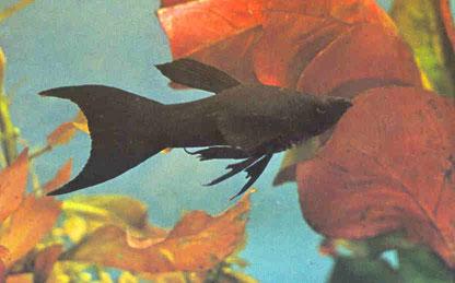 http://www.twilightbridge.com/hobbies/aquariums/f5.jpg